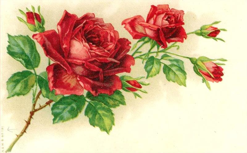 Открытки из звездных роз