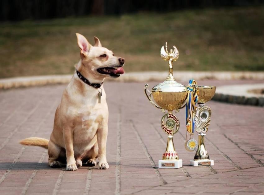 для конкурсы собак картинки решила использовать