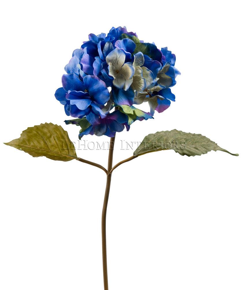 Цветок гортензия картинки 8