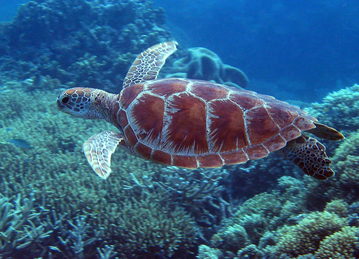 морские животные австралии картинки крупных фигур