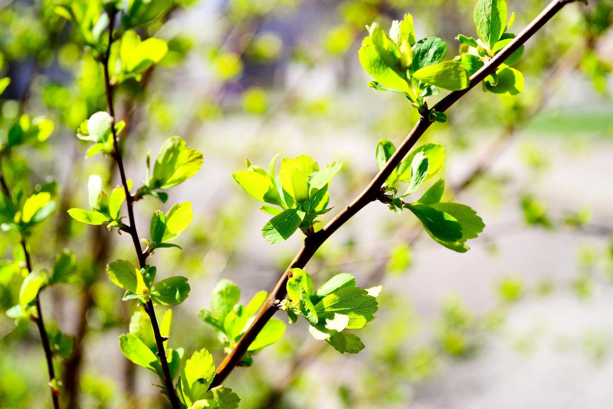 найдено весенняя зелень фото покажем все