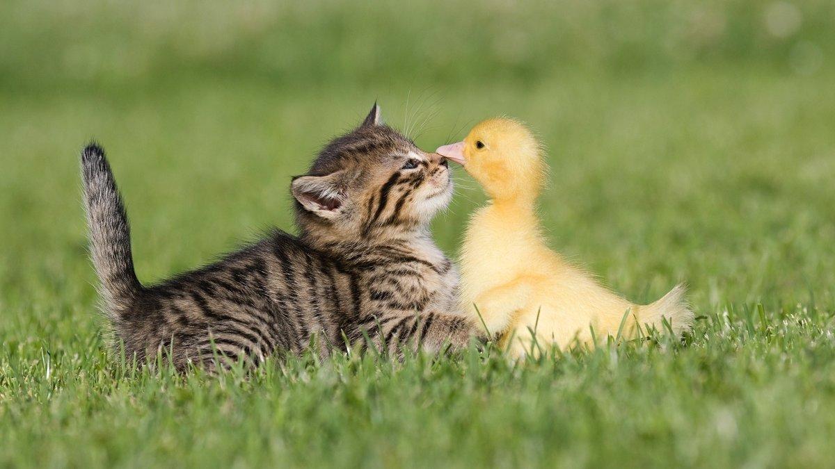 Картинки доброе утро прикольные с животными и птицами, картинки приколы