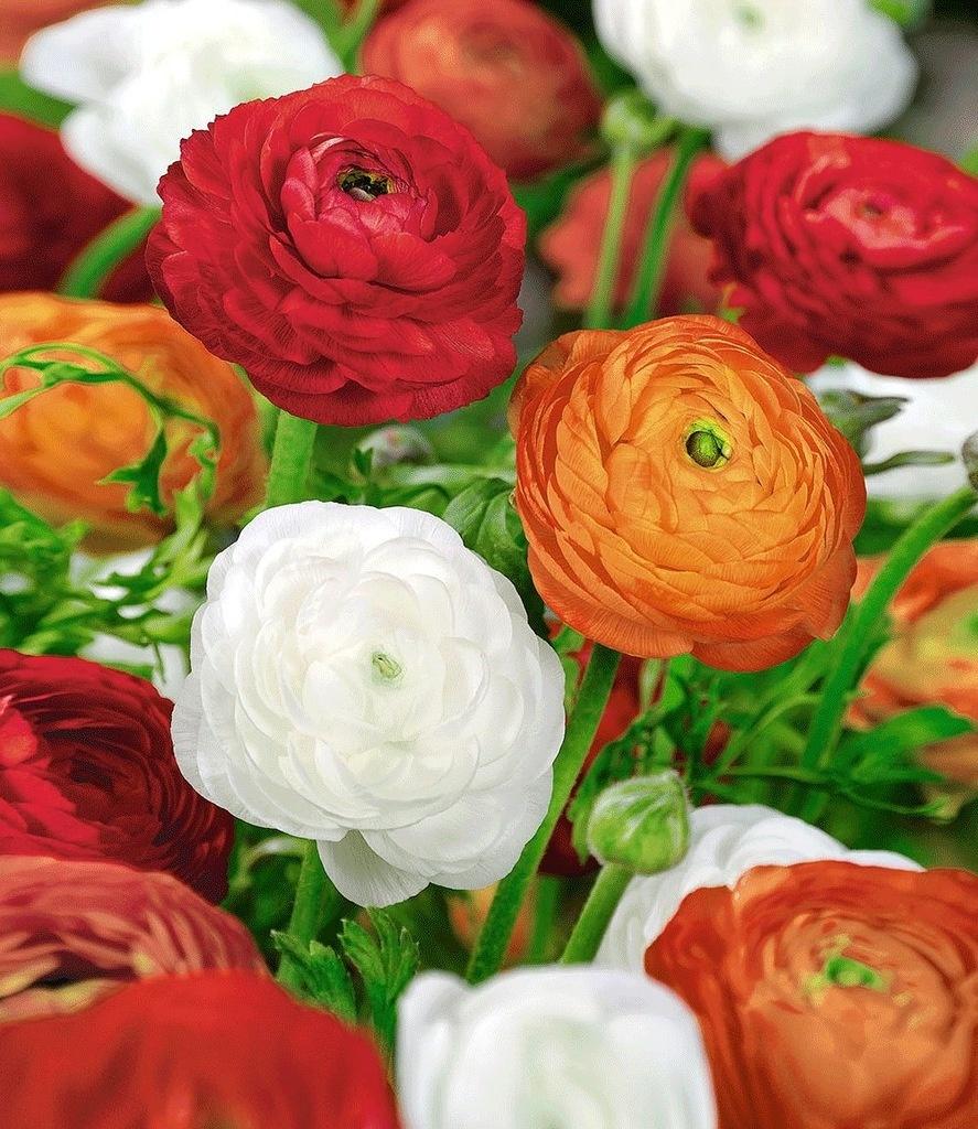 Картинки лютики цветочки, поздравлениями днем