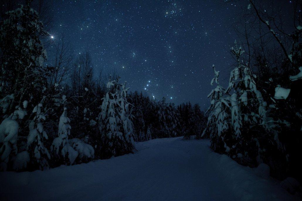 фото в лесу ночью зимой обоями можно украсить