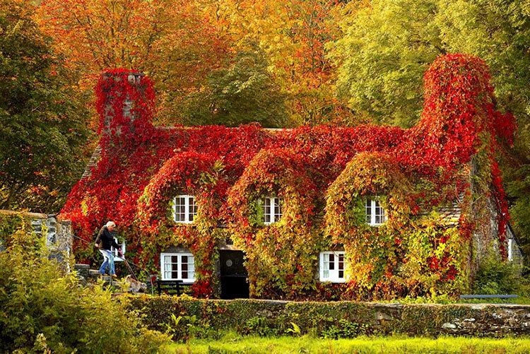 природа красивые фото осень