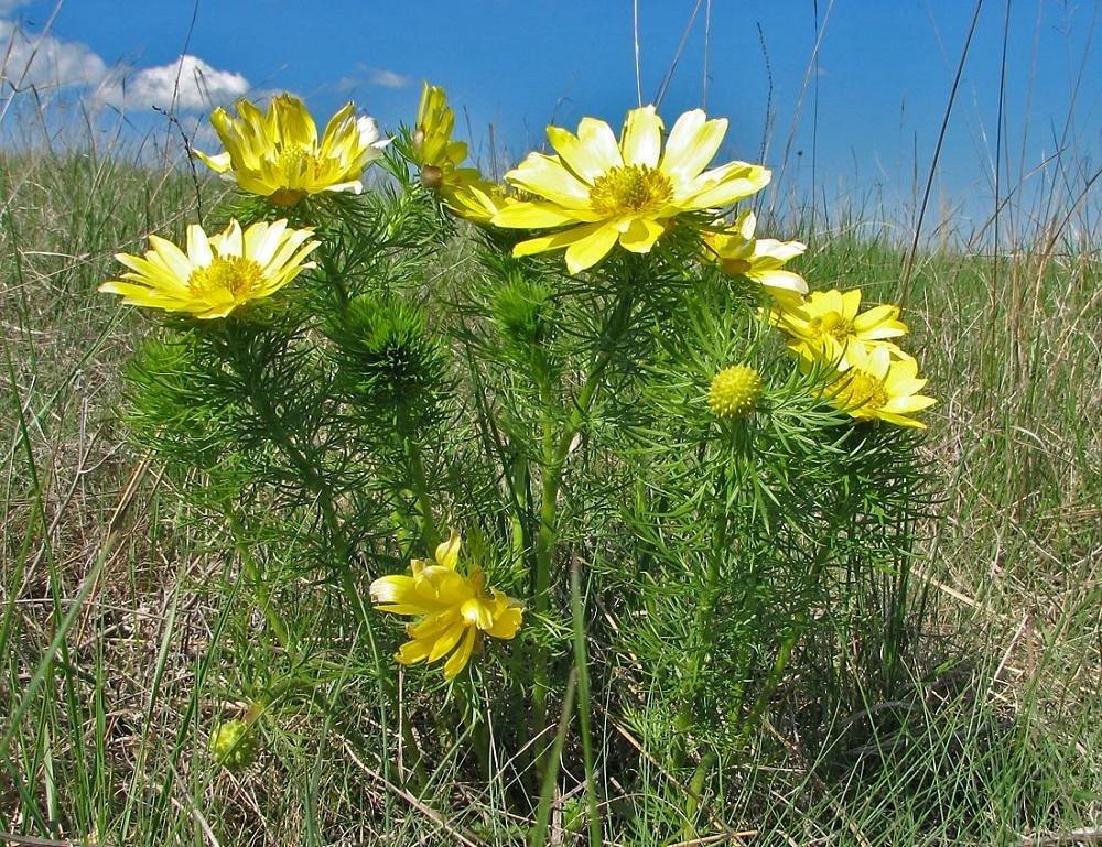 лечебные травы и растения с фото что