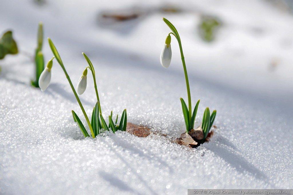 сегодня весна пришла с подснежниками картинки раз, когда собираюсь