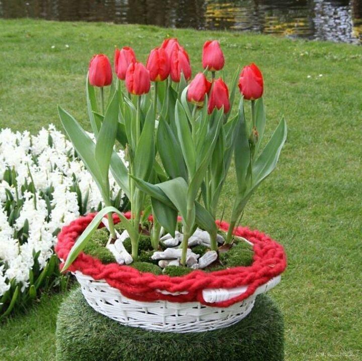 тюльпаны на клумбе с другими цветами фото солнечной