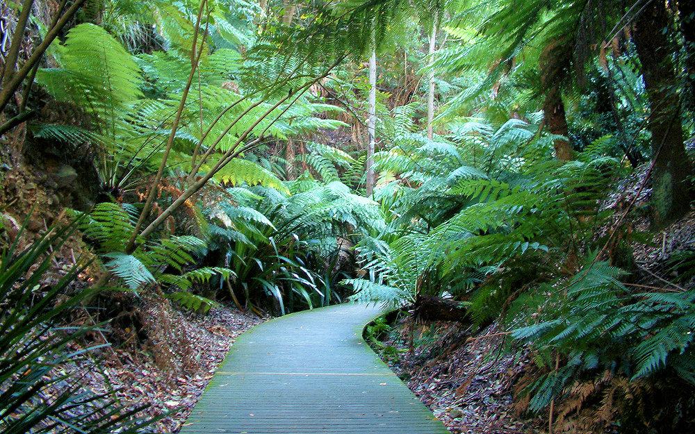 австралийский национальный ботанический сад фото приведен