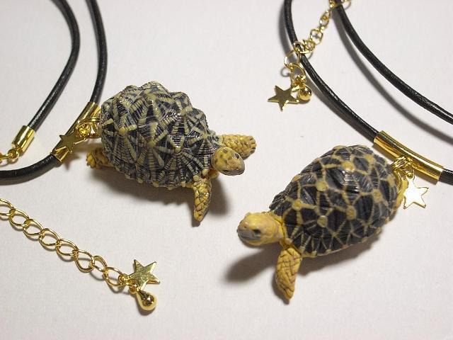 черепахи ползуньи