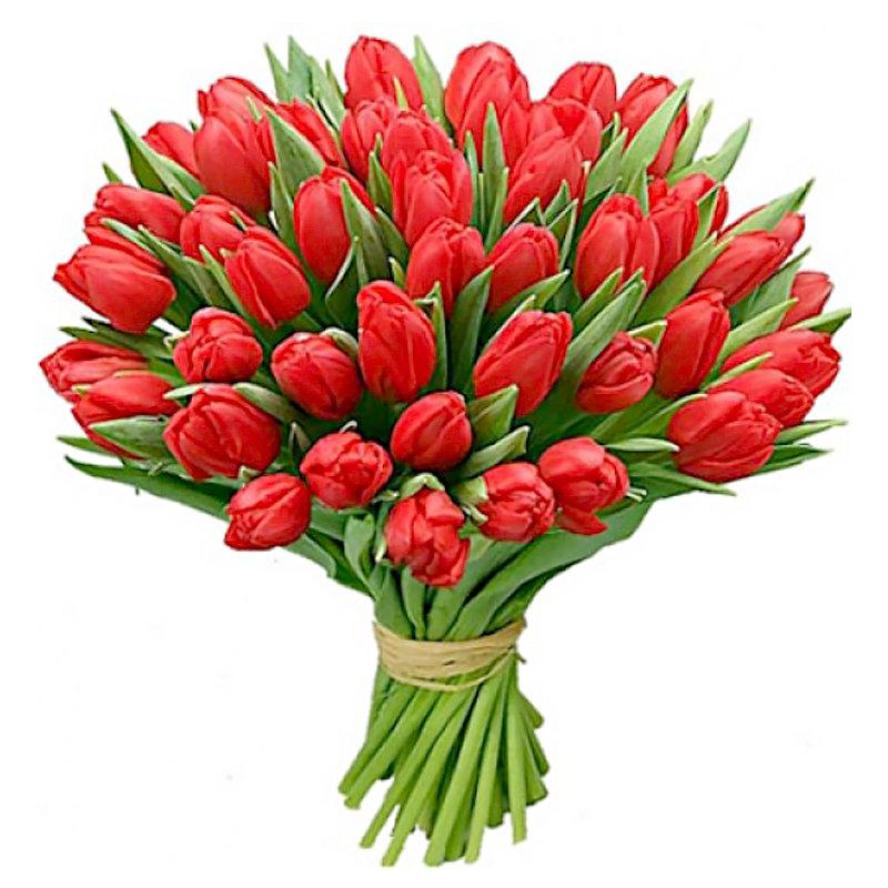 Днем, картинки красных тюльпанов