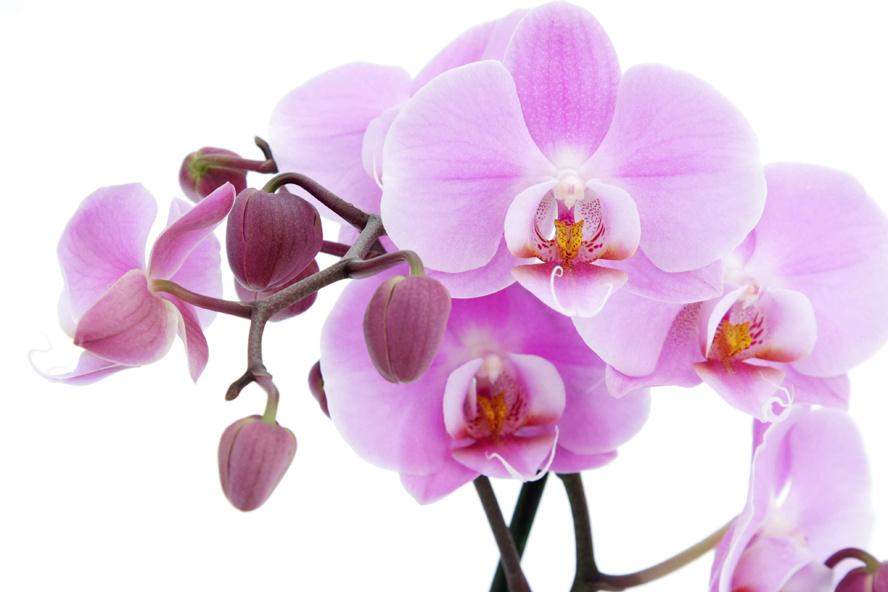 Летие сестре, картинка с цветком орхидея