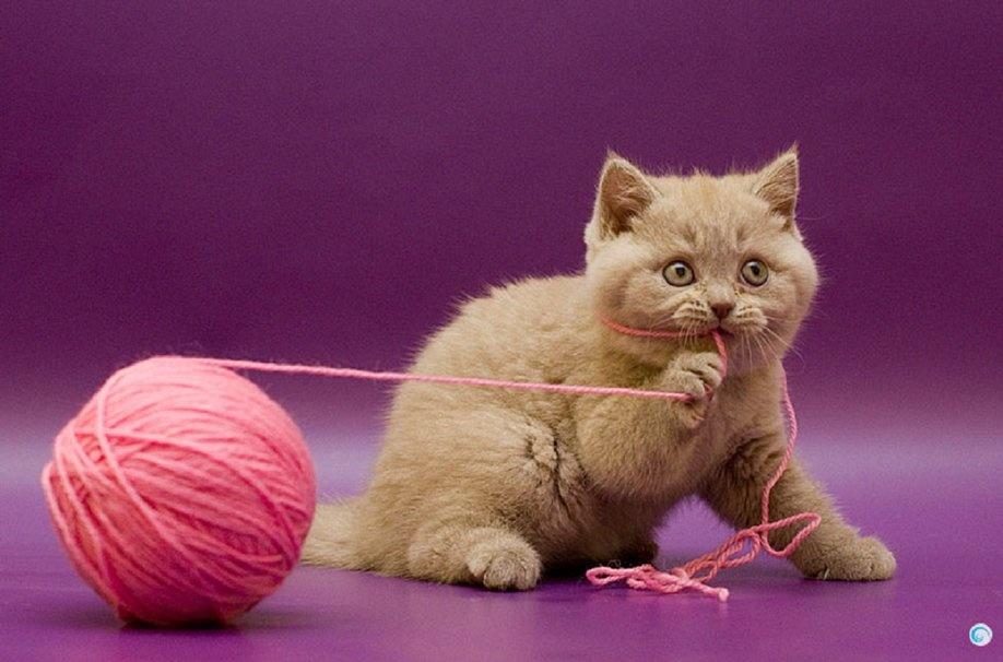 Картинка котенок и клубки