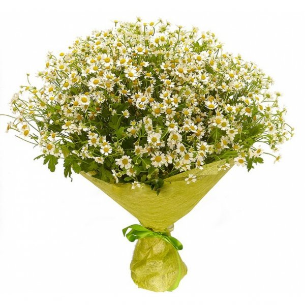 Каталог цветов по заказу через полевых, хризантем гостевую