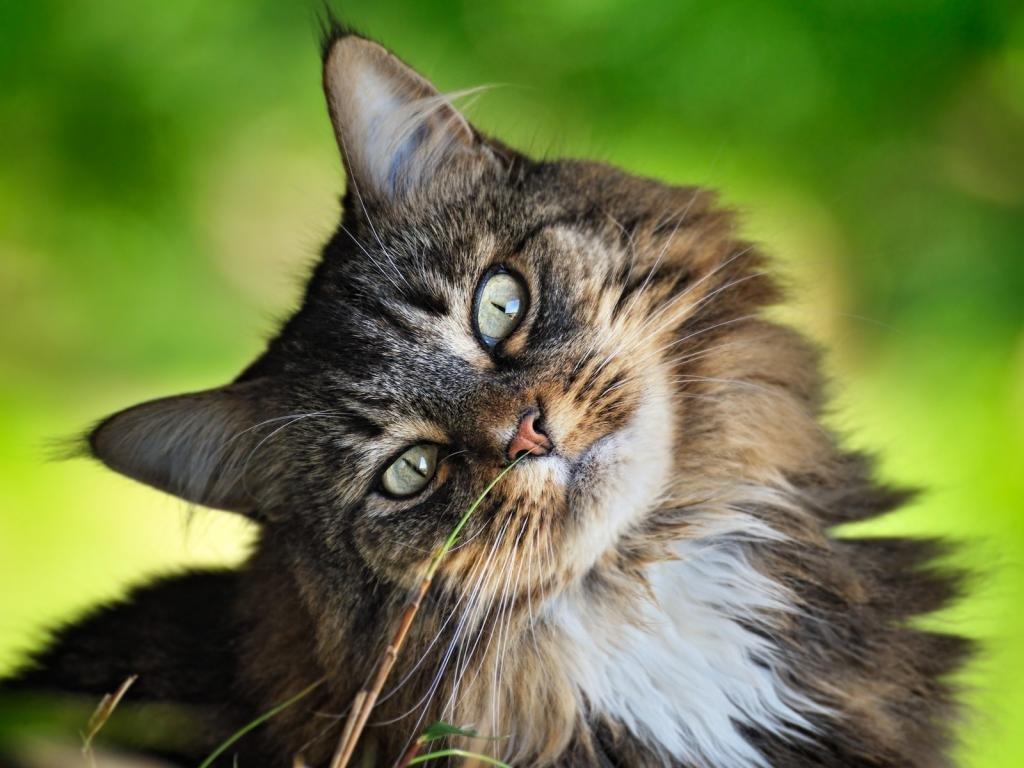 Картинки красивые прикольные кошки