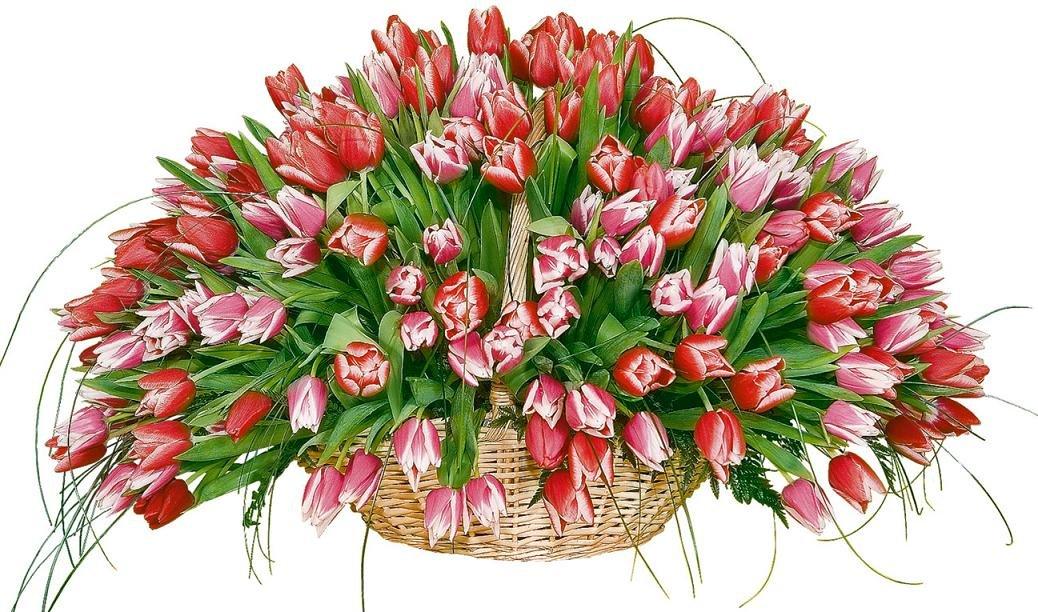 путём открытка с днем рождения красивый букет тюльпанов ковш