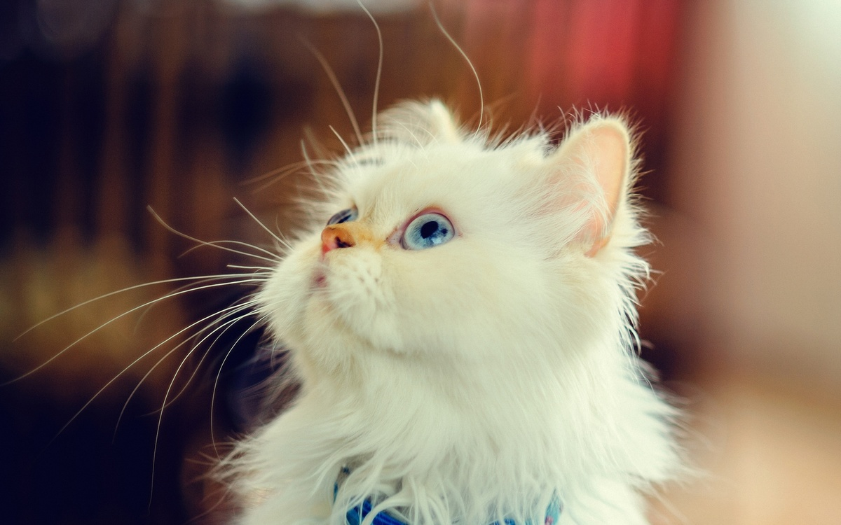 красивые фото с кошками на аву высказывания заслуживают того