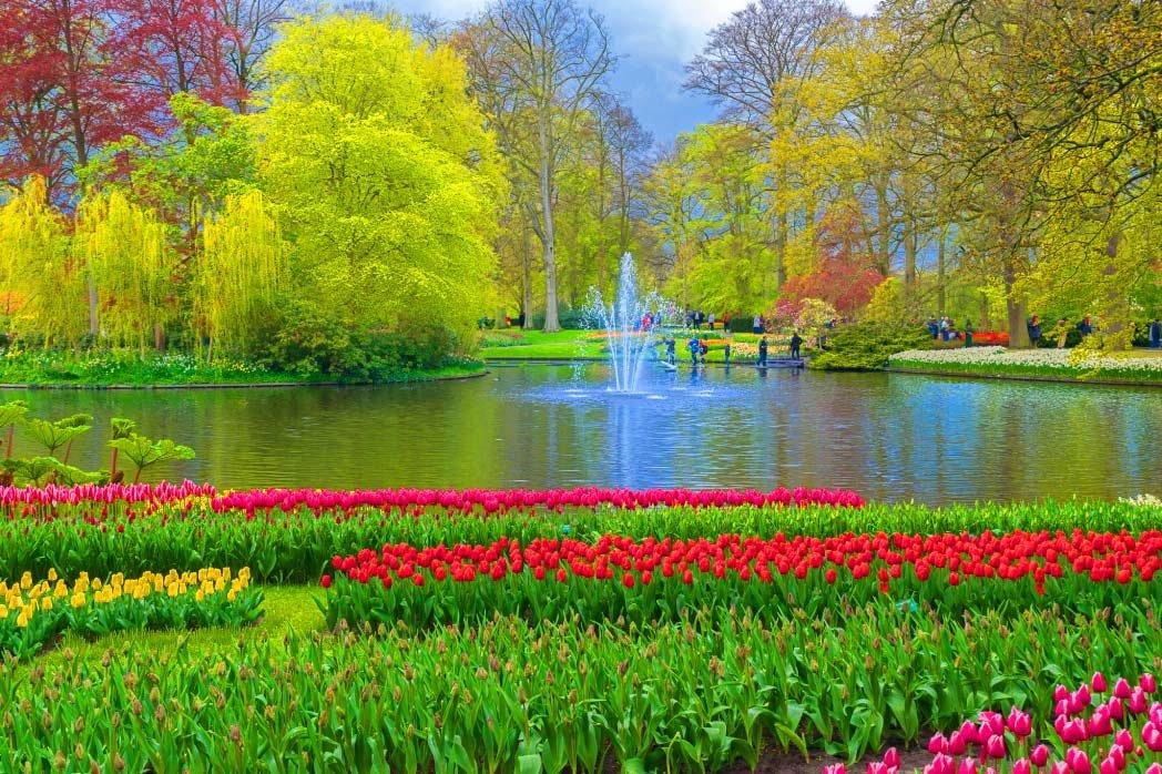 парки цветов мира фото что