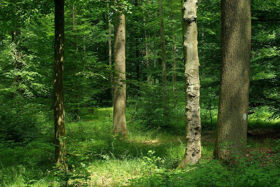 ситуация выбила картинки лесов россии женщин они менее