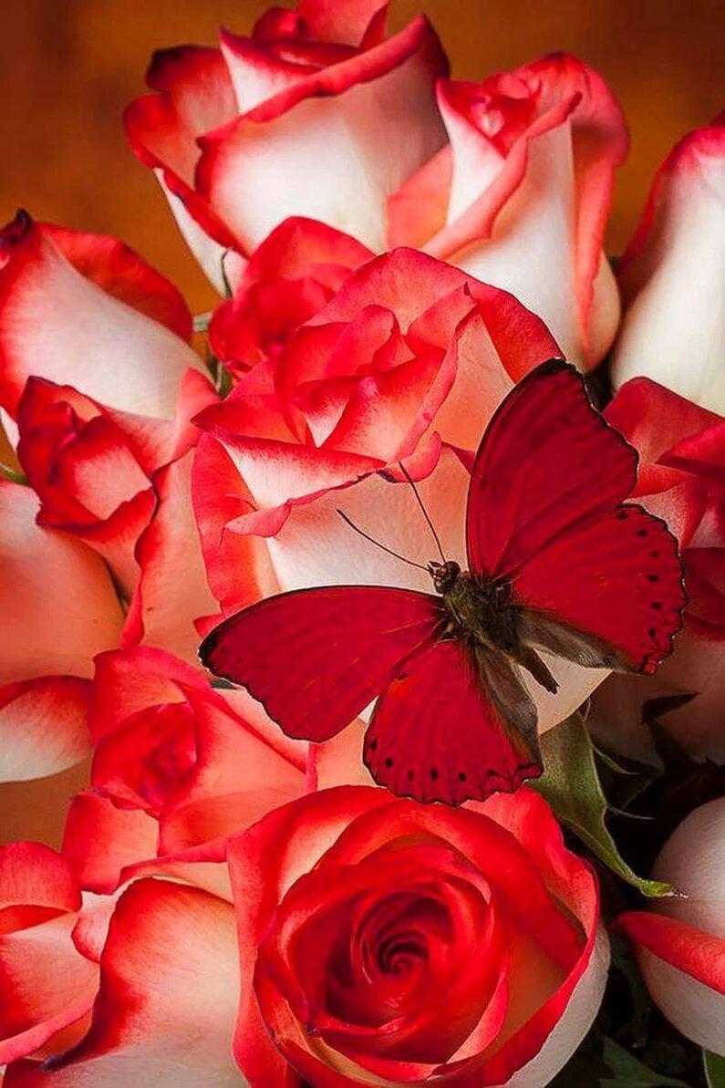 Картинки розы красивые на аву