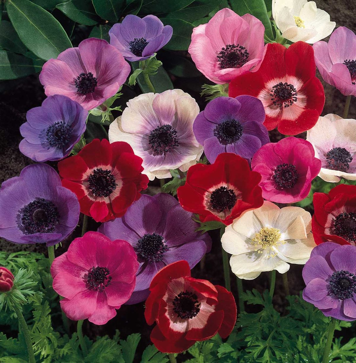 Днем рождения, картинка садовые цветы