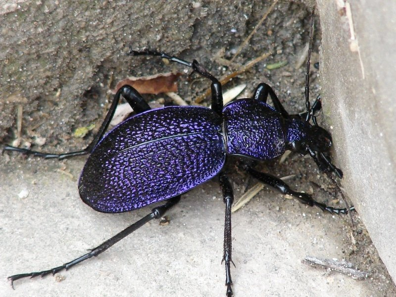 Список с фото жуки симферополь