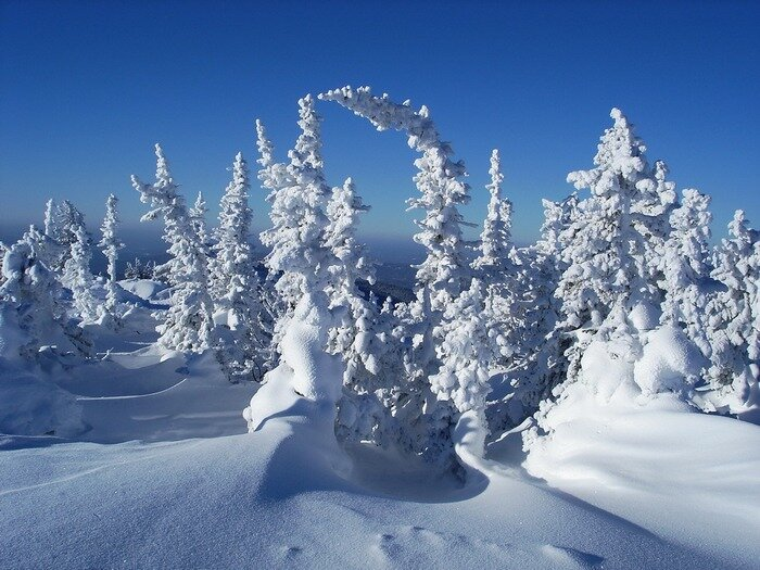 16. Укутавший снег ели создает ощущение сказки.