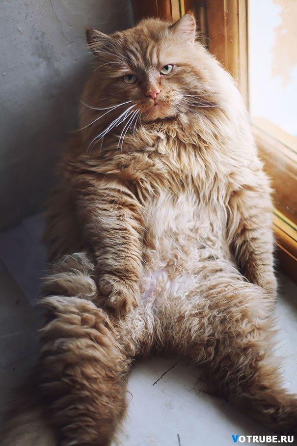 20 гигантских котов, которые явно давным-давно перестали быть котятами Выпуск 207 (20 фото) » Картинки, фото, приколы, девушки - Votrube.ru