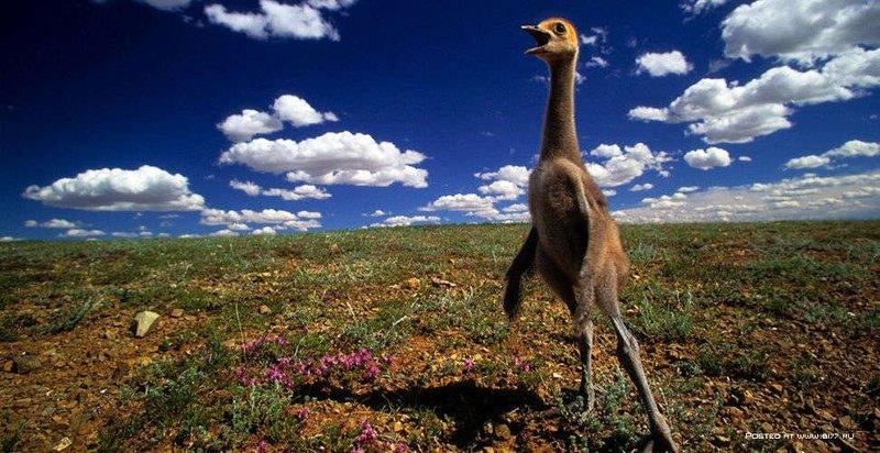 Дикая природа от Art Wolfe (52 фото) » Фото лучших фотографов планеты! Фото девушек, Красивые девушки!