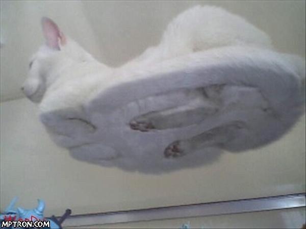 Эти милые кошки :D приколы с кошками :D
