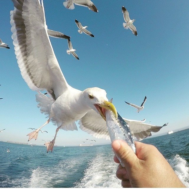 Фото - GoPro Lovers