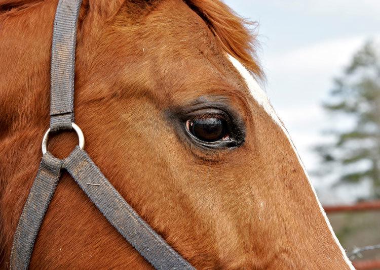 Фото животных фотографии Лошади животные картинки животный мир