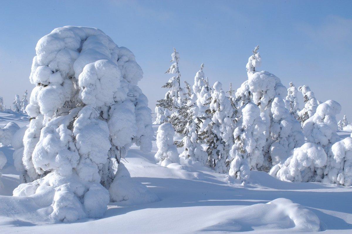 Фото зима в тайге