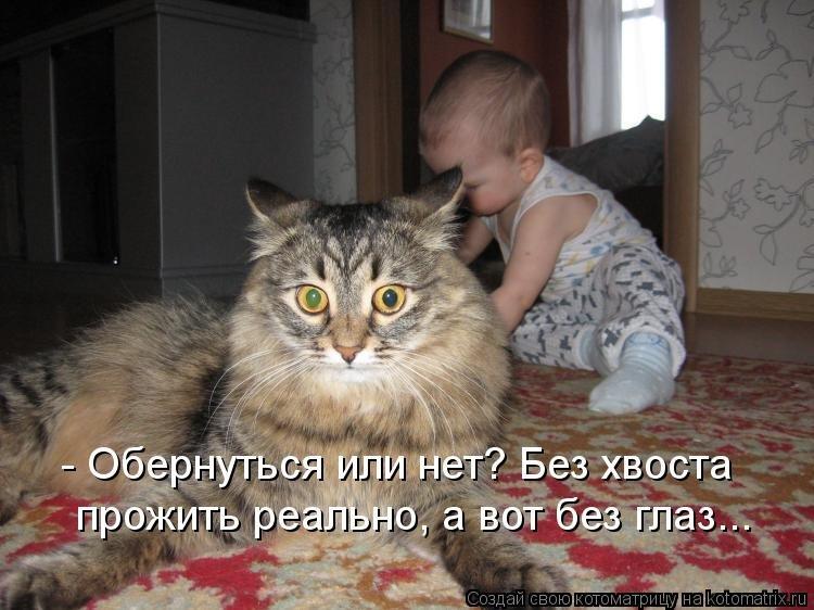 Кот смешно