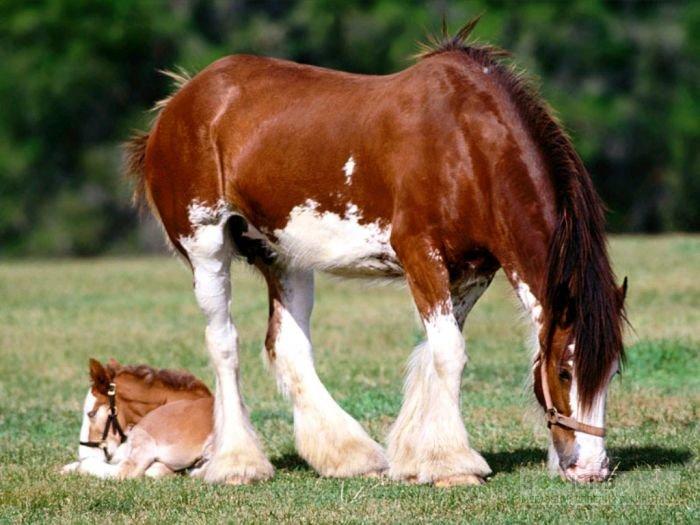 Лошади фото кони обои лошади, фото коней кони, фотографии лошадей коней, фотообои лошади, домашние животные