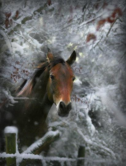 Лошади пони зебры - clipartis Jimdo-Page! Скачать бесплатно фото, картинки, обои, рисунки, иконки, клипарты, шаблоны, открытки, анимашки, рамки, орнаменты, бэкграунды