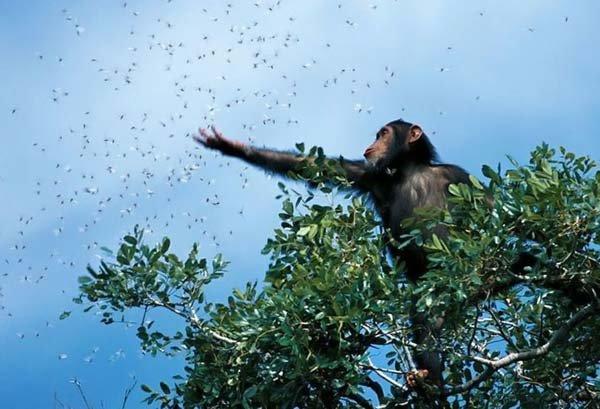 Лучшие фото дикой природы 2008 года