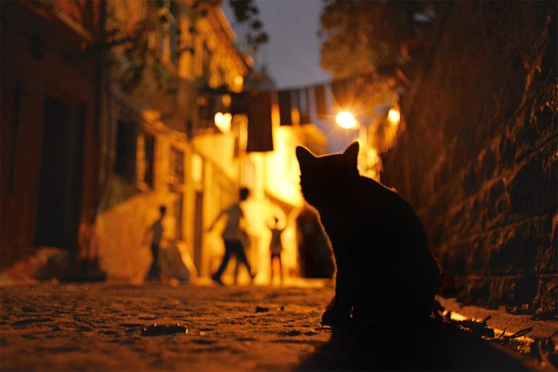 Ночная фотография