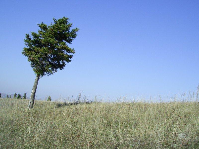 Одинокая ель на Лысой горе