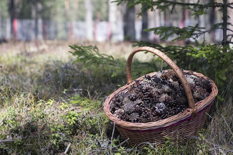 От новогоднего декора до баночки варенья, или Что можно сделать из обыкновенных шишек / идеи / 7dach.ru