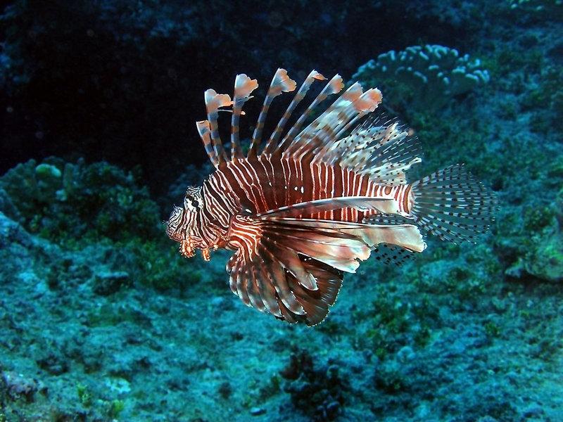 Подводный мир рисунки животных