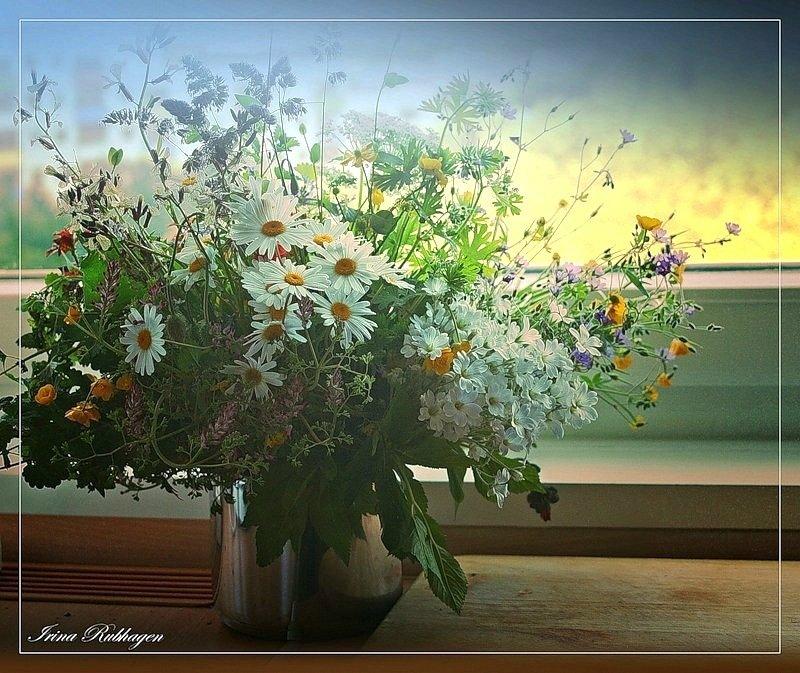 Полевые цветы | 289 фотографий