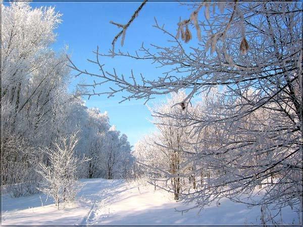 Русская зима. Фото зимнего леса, снег, лед, сосульки. Красивые зимние пейзажи
