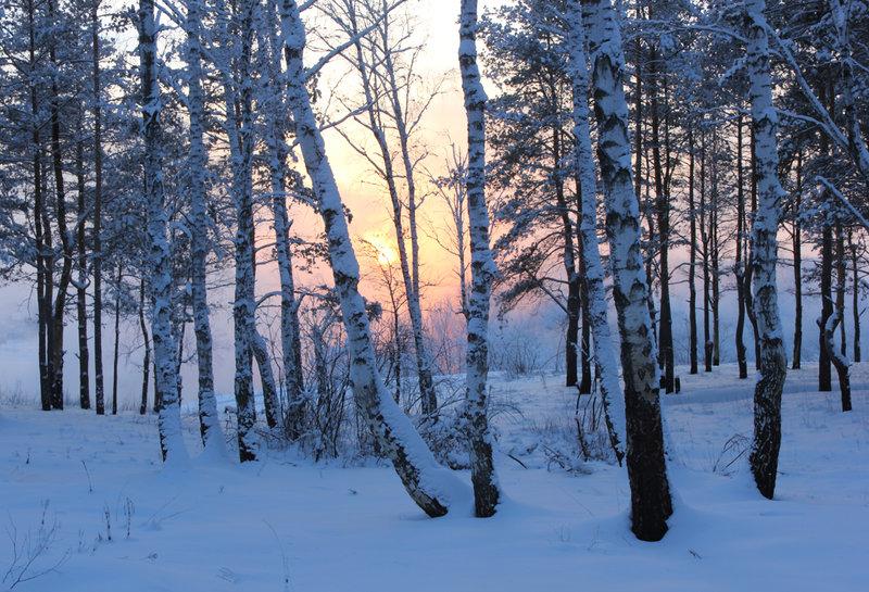 Зима - Фото галерея - Галерейка