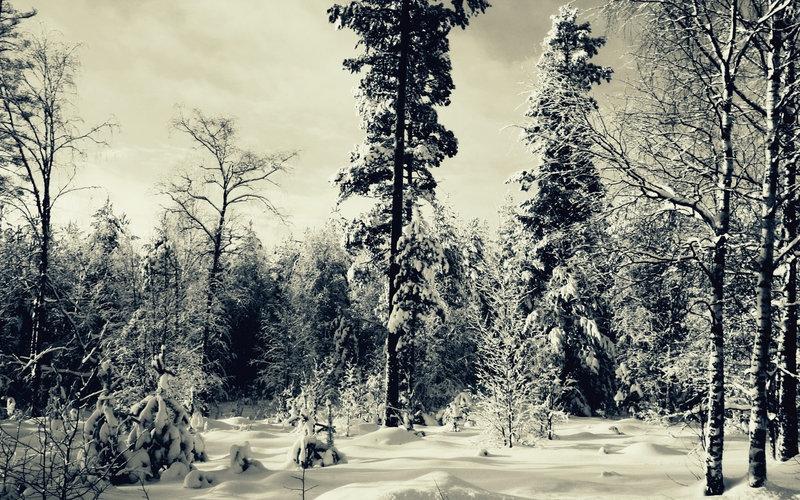 Зимний лес - Лес - Фото - Фото природы, красивые картинки, обои