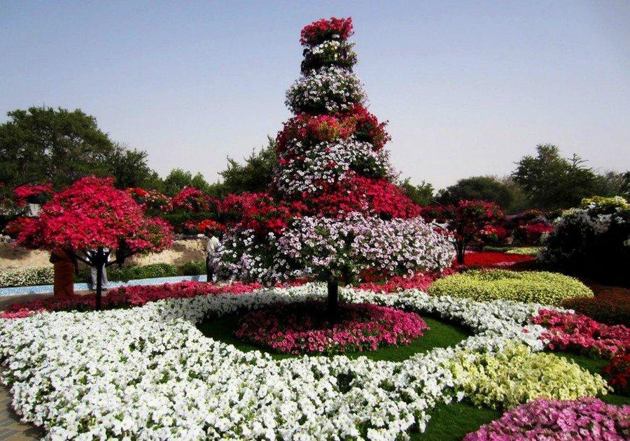 фотографии всех цветов на планете отказывался принимать христианство