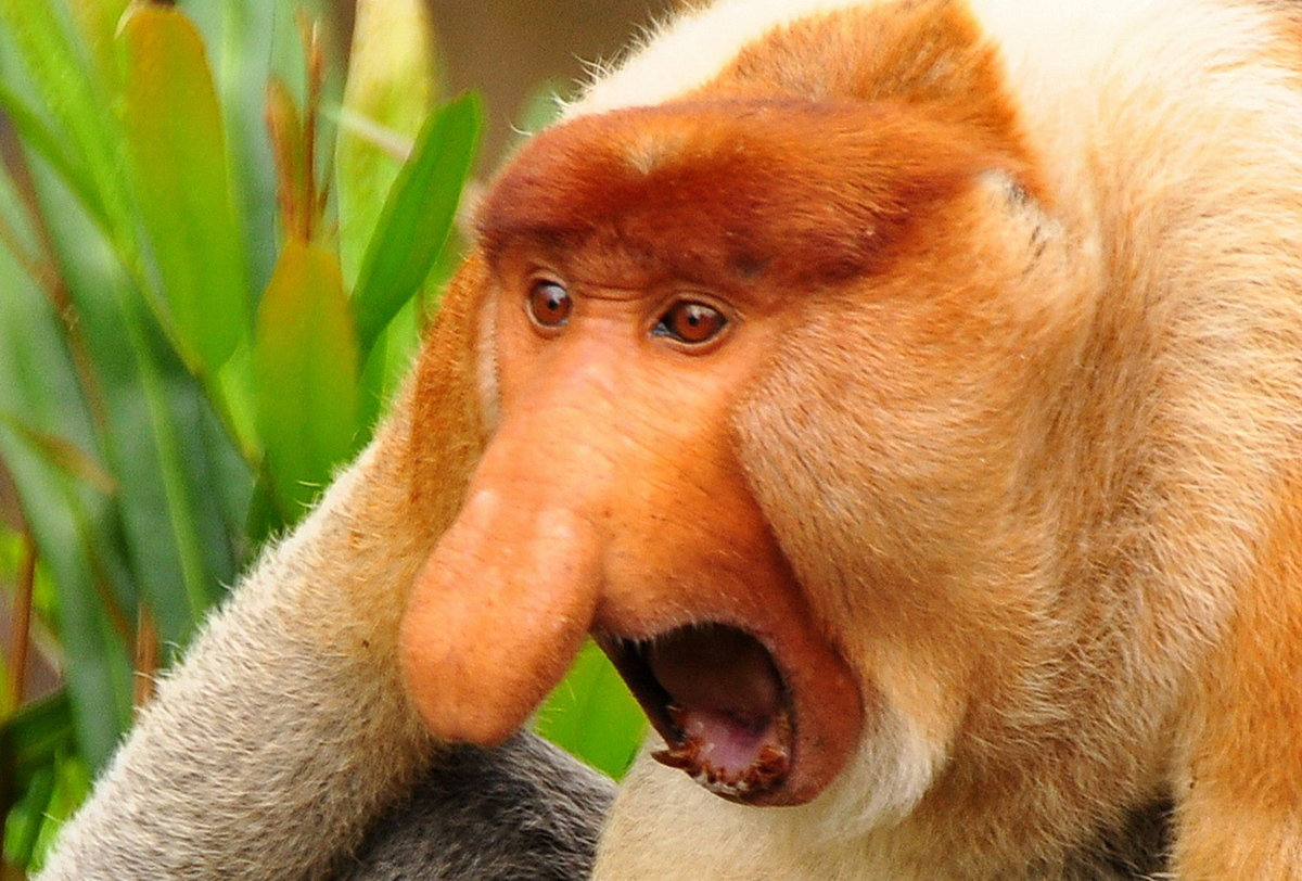 Надписью, смешные до слез картинки животных