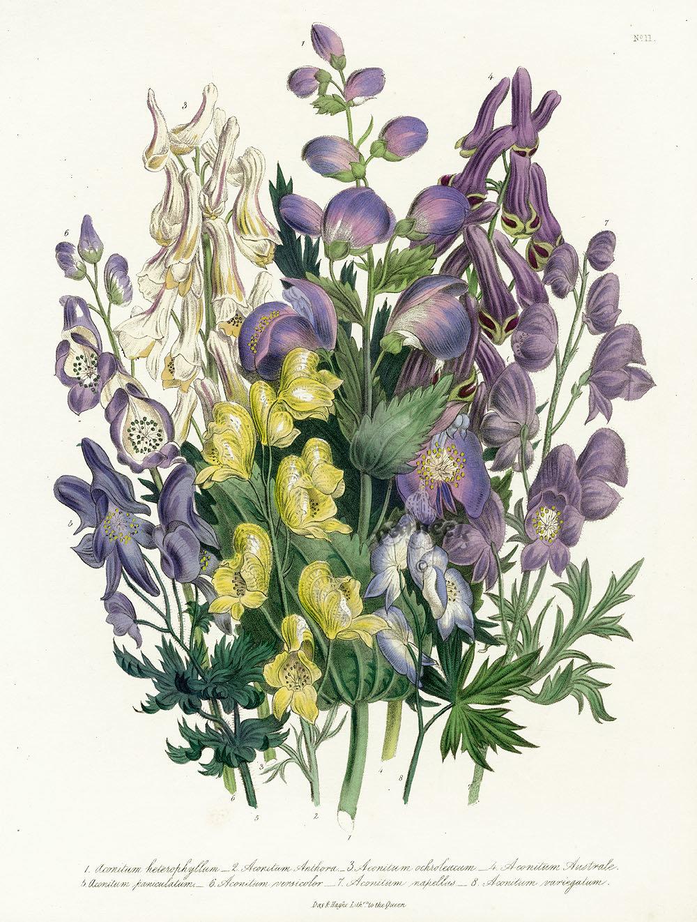 местных ботанические рисунки растений открытки республики признали