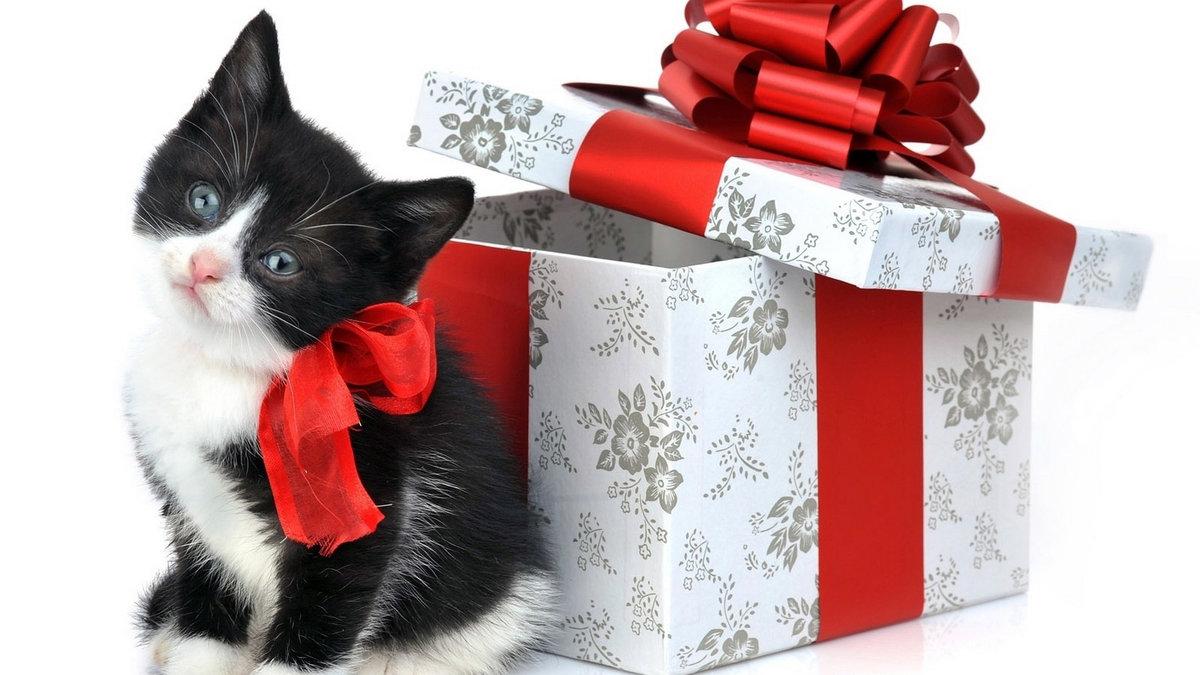 Подарки и открытки в контакте, повышением службе
