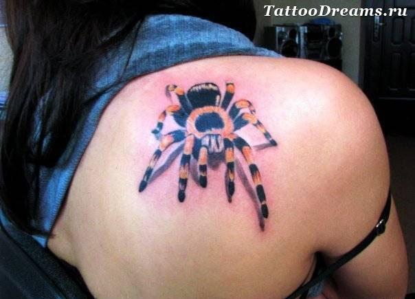 тату паук в паутине - Фотографии татуировок